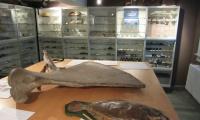 Eröffnung Salzmann'sches Naturalienkabinett